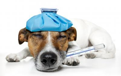 Hundewelpen und Positive Psychologie: 3 Tipps